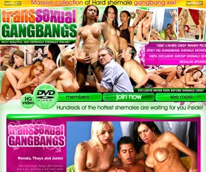 welcome to Transsexual Gangbangs! Massive Collection of Hard Shemale Gangbang Porn